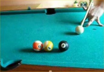pool-trick-shots